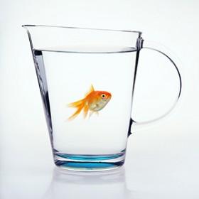 Bardağın Dolu Tarafında Yüzen Balık Olsam